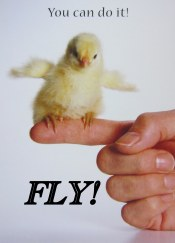 FLY (Chick)